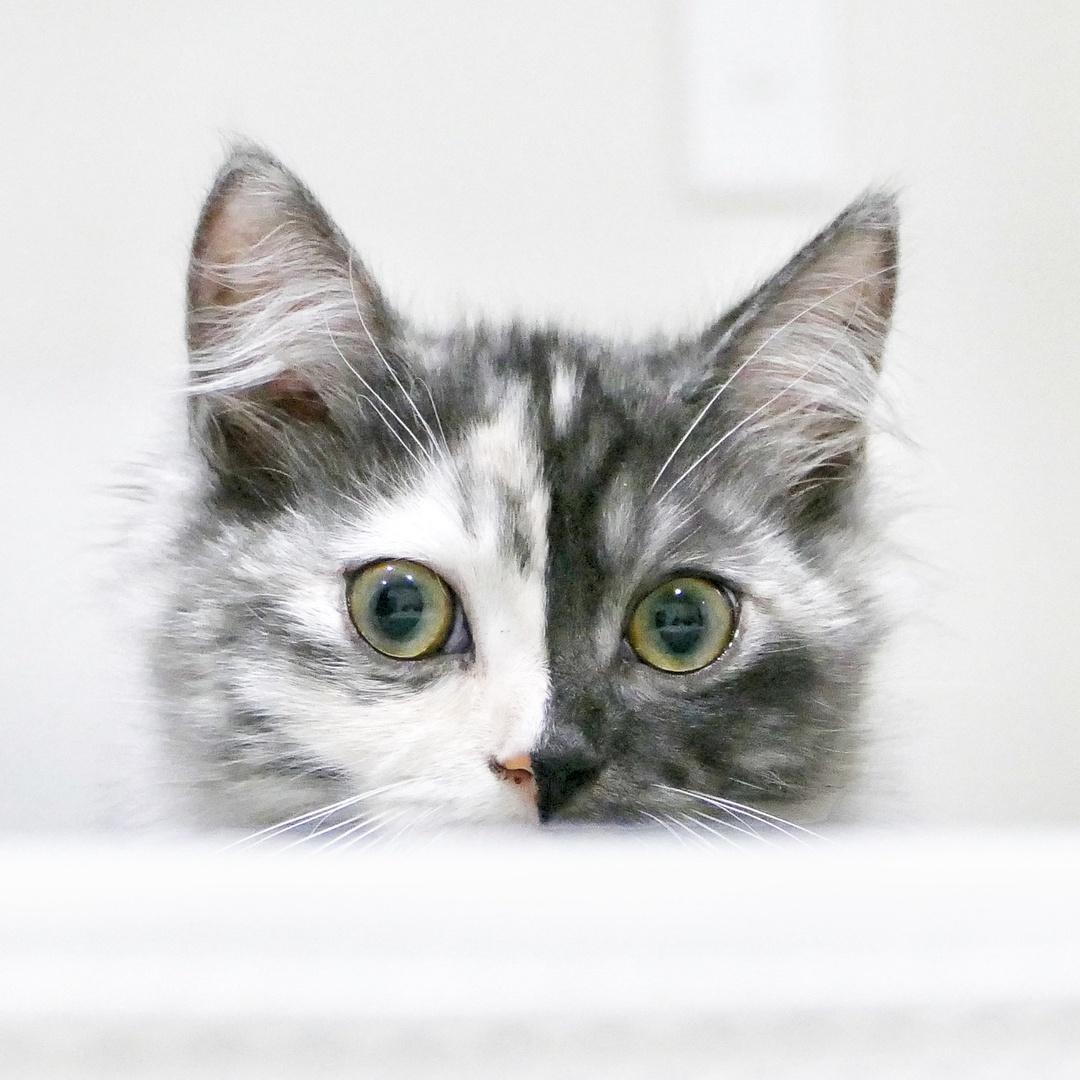 geri.cat TikTok avatar