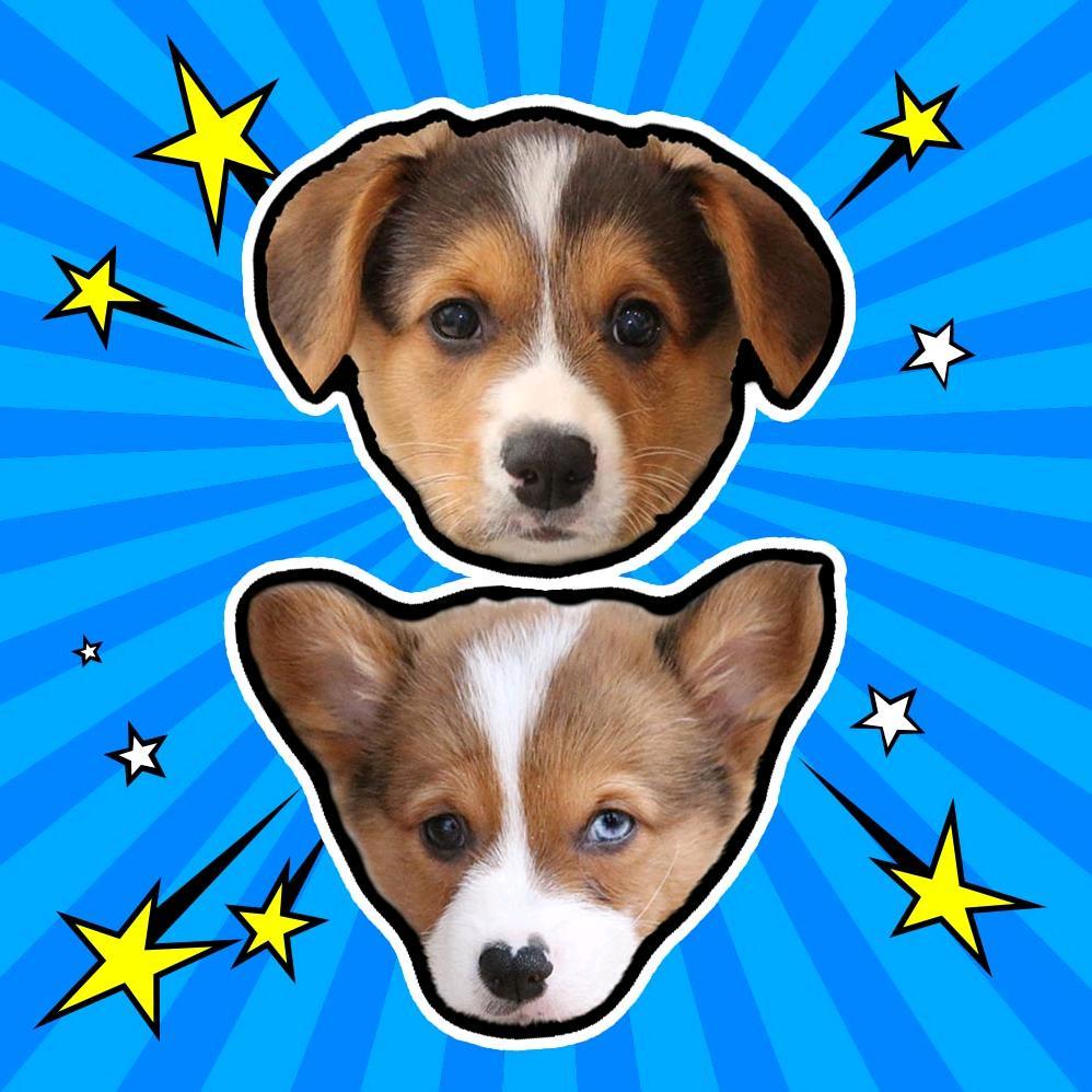 Doby & Blue - Corgis TikTok avatar