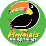 animalsdoingthings TikTok avatar