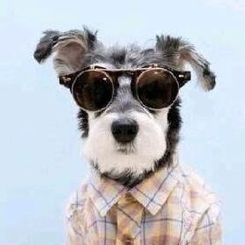 Doggy_Love TikTok avatar