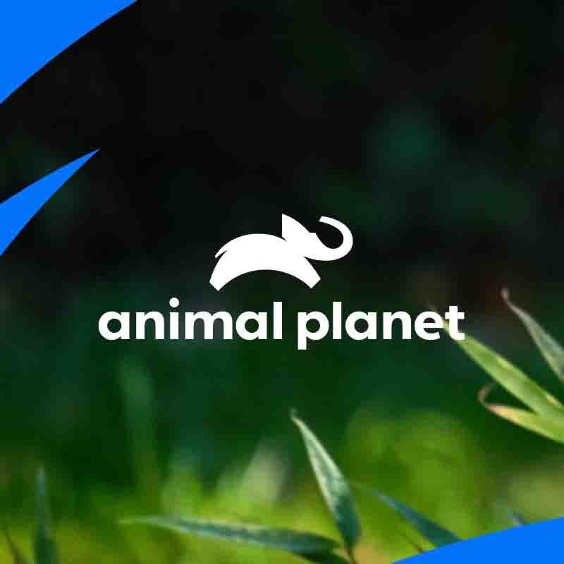 Animal Planet TikTok avatar
