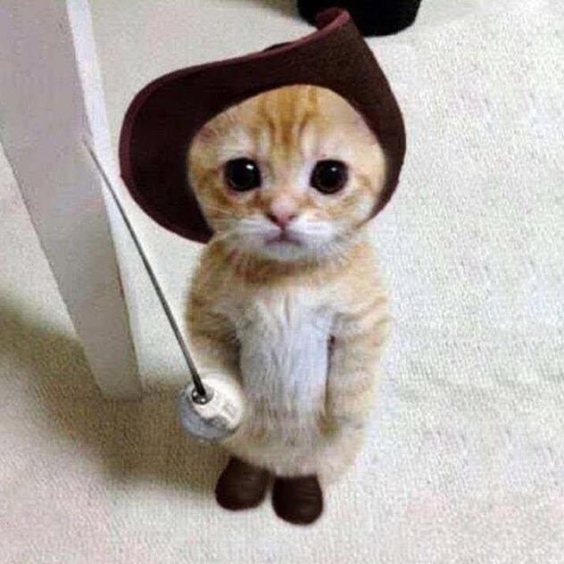 Funny Animals TikTok avatar