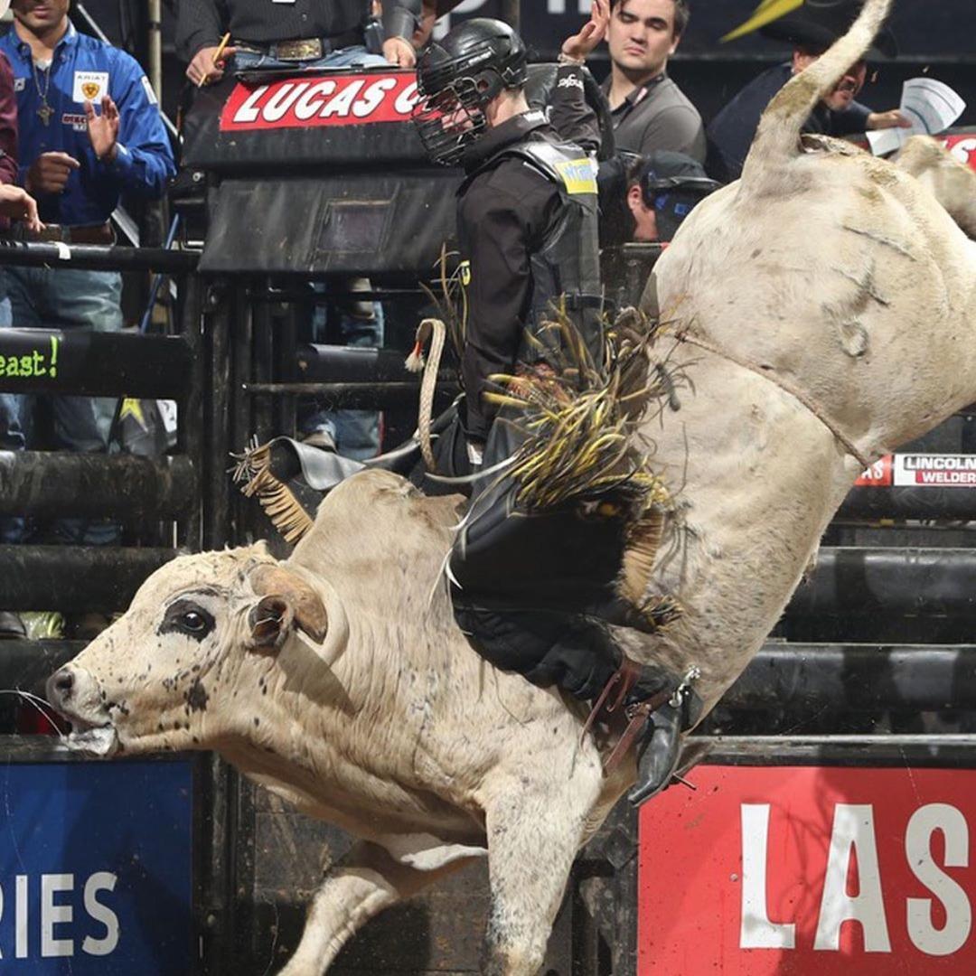Bullfightingvids TikTok avatar