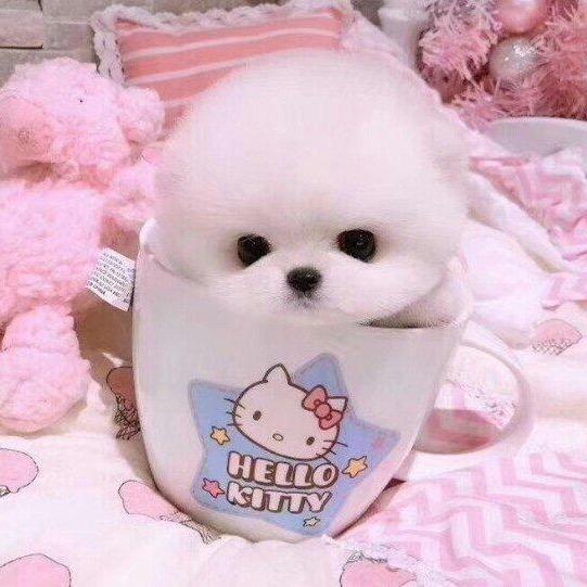 Puppy TikTok avatar