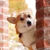 #Love Pet TikTok avatar