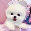 pipi.puppy TikTok avatar