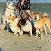 Dog Family 🐶🐕🦊 TikTok avatar