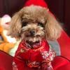 lucky PET TikTok avatar