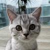 Tofu The Cat TikTok avatar